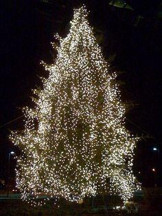 Christmas Tree at Mount Auburn Hospital