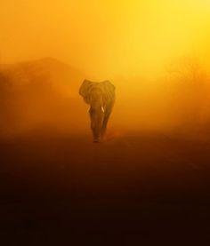 Africa Sunset Elephant | Daniel Wechsler