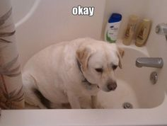 This is how Ellie looks in the bathtub!