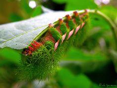 Não é Flor, mas... | Não é flor, mas bem que parece. Melhor … | Flickr