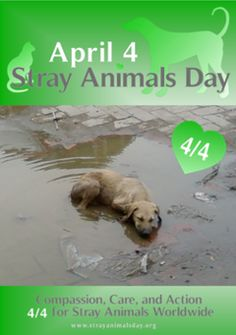 April 4 is Stray Animals Day.Do something nice for a stray!!