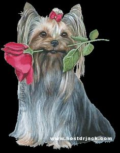 dogs - See this image on Photobucket. Cute Cats And Dogs, Animals And Pets, Cute Animals, Gifs, Yorkshire Terrier, Swan Painting, Wolf Photos, Puppy Images, Yorkie Dogs