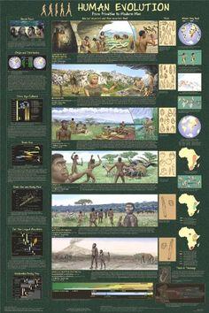 Human Evolution Poster 24 x 36 123Posters http://www.amazon.com/dp/B000YZJLZG/ref=cm_sw_r_pi_dp_MXhdub13VQRY4