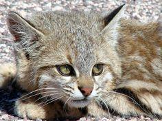 Colo Colo Cat | Colo Colo o U de Chile - ¿más gente en los 5 últimos años?