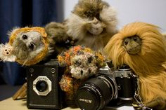 #Monkey Monday - 33