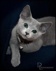 Everything that moves  serves to amuse a cat  `F.A. Paradis de Moncrif