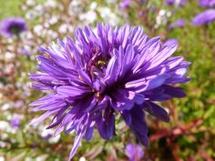 Yabani Çiçek, Çiçek, Bitki, Doğal, Bloom, Taçyaprağı