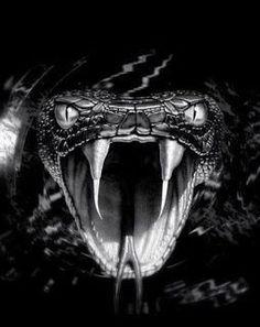 Scary Snakes, Cool Snakes, Beautiful Snakes, Animals Beautiful, Cute Animals, Kobra Tattoo, Black Mamba Snake, Regard Animal, Snake Wallpaper