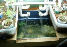 Everyone makes mistakes, and if you're a beginner to aquaponics, then chances are that you'll stumble across some of the common problems with aquaponics.
