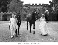 Wedding couple with horses.