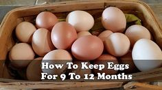 "We have all been told all these years about eggs needing to be refrigerated. First of all, they come out of the chicken ""warm"" don't they? so how did people hundreds and thousands of years ago deal with keeping eggs fresh? If you have chickens this is the article for you."