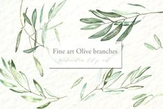 Olive branches. Watercolor clipart.