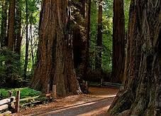 henry cowell redwoods state park - Google Search