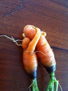 Carrot Hugs!