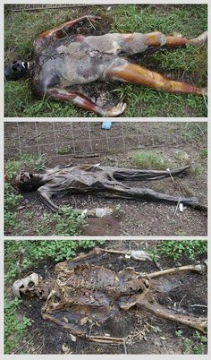 Donate body to Freeman Body Ranch..(?) The body goes through three stages of decay when it's inside the cage (pictured below). Forensic studies.