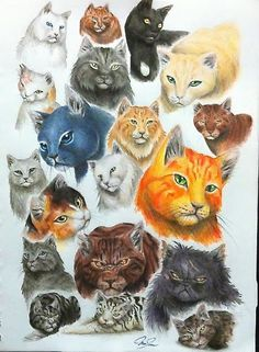 Warrior Cats ThunderClan by SoooThisIsArt----Wow on DeviantArt