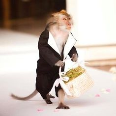Monkey Ring Bearer? Why not? We have anything and everything to surprise and amaze your guests and family, ensuring they never forget your special moment. One & Only Bali Weddings will cater an unforgettable and highly customised experience for you, the wonder and magic of a one-of-a-kind Bali wedding is just an email away.