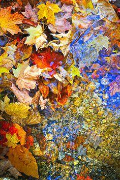 Fall Leaves in Stream