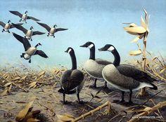 Les Kouba 1958-1959 Federal Duck Stamp Print