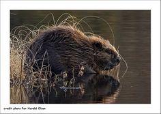PHOTONATUREFONTAINEBLEAU: Bialowieza Une forêt primaire d'exception. Note 2012. 006
