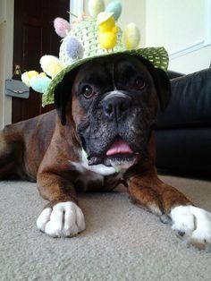 How do you like my Easter bonnet?