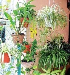 О пользе комнатных растений мы наслышаны еще из школьного курса биологии: вырабатывают кислород, поглощают углекислый газ... На самом деле зеленые украшения наших столов и подоконников не так просты, как может показаться на первый взгляд. У каждого из них свой характер и способность на нас влиять....