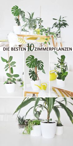 Was sind die besten Zimmerpflanzen für die Wohnung? Ich verrate euch meine zehn… What are the best house plants for the apartment? I'll tell you my ten most beautiful plants for the apartment and give you a few tips on care. Garden Care, Belle Plante, Best Indoor Plants, House Plants Decor, Bathroom Plants, Interior Garden, Ikea Interior, Foliage Plants, Good House