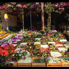 plants and flowers Marquet at Cuemanco, Mexico City #plants #flowers #cuemanco