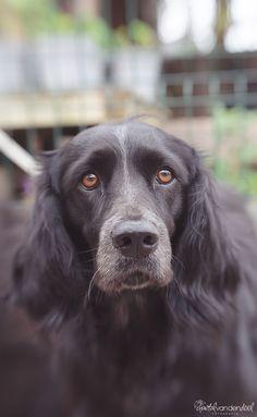 #Lensbaby #Sweet50 #Dog