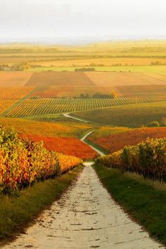 Autumn Vineyard Landscape in Hungary - Landscapes - Beautiful perspective by Gabor Gonczol Beautiful World, Beautiful Places, Belle Photo, Beautiful Landscapes, Wonders Of The World, Places To See, Countryside, Vineyard, Photos