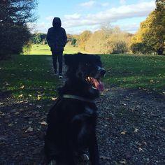 #london #dogwalking #beckenham #sun #relax