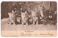 Kittens, antique postcard