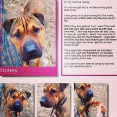 Honey is looking for a new home! She is based in the Lancashire area :) #safeandsound #rescue #rescuedog #dontshopadopt #dog #newlife #happy #love #givesomuch #giveadogachance #somanyneedanewhome #adoption #pet #beautiful #bestfriend #mansbestfriend www.safe-and-sound.org