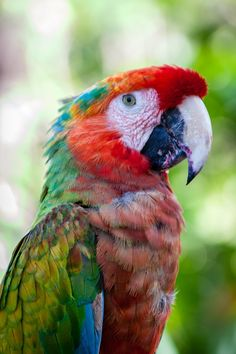 Parrot by Selcuk Arslan on Parrot, Bird, Animals, Parrot Bird, Animales, Animaux, Birds, Animal Memes, Animal