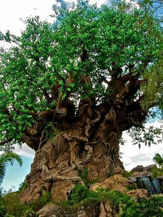 Tree of Life   Real?