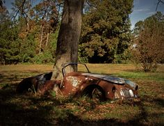 An oak tree grows in the middle of an abandoned MG in North Carolina