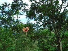 Nature Pictures, Costa, Dandelion, Birds, Flowers, Plants, Dandelions, Bird, Plant