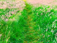 pathways Pathways, My Photos, Places, Paths, Walking Paths, Lugares