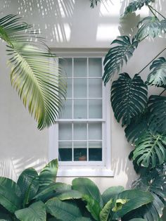 A tropical house that smells like holidays: a window open to nature and greenery Exterior Design, Interior And Exterior, Exterior Colors, Motif Tropical, Tropical Leaves, Tropical Plants, Tropical Garden Design, Estilo Tropical, Tropical Vibes