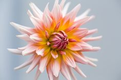 Flowers brighten your day by Winfried Werner on 500px
