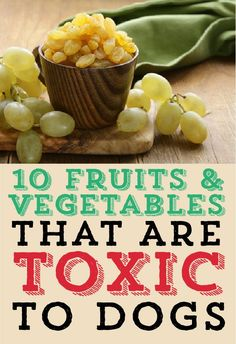 Sure, you can give your dog healthy food... but wait, not so fast! Here are 10 fruits and vegetables that are TOXIC to dogs!