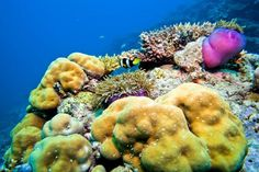 MALDIVES UNDERWATER IS DIVERS PARADISE