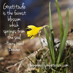 """Gratitude is the fairest blossom which springs from the soul"" (photo by www.mollympeterson.com)"
