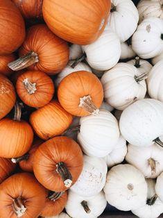 Friday Flotsam Cute Fall Wallpaper, Friday, Pumpkin, Wallpapers, Pumpkins, Wallpaper, Squash, Backgrounds