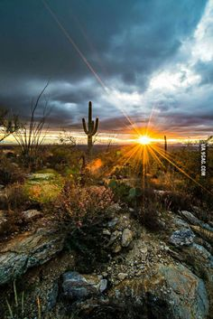 Sonoran Desert- Most Beautiful Place in Arizona! Desert Dream, Desert Life, Desert Sunset, Sonora Desert, Beautiful Sunset, Beautiful World, Beautiful Places, Beautiful Pictures, Visualisation Techniques
