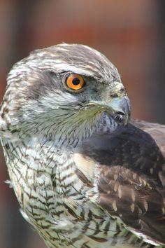 Featured photo by Freddie Ramm. Discover more free photos from Freddie: https://www.pexels.com/u/freddie-ramm-6839 #bird #animal #eagle