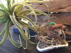 Igelbaby aus Filz liegt im Moos in einer Nussschale und träumt von dir Planter Pots, Baby, Beret, Hedgehog, Felting, Heart, Baby Humor, Infant, Babies