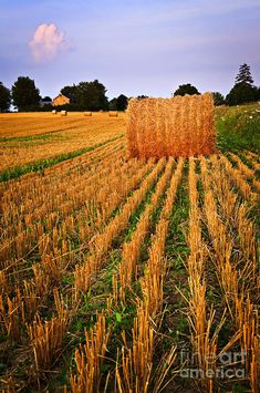 Farm Field With Hay Bales At Sunset In Ontario by Elena Elisseeva, via fineartamerica.com