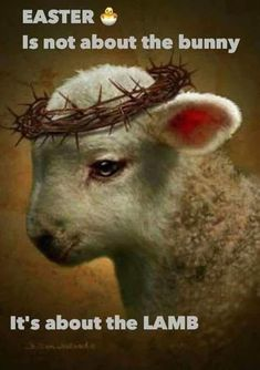 Oh Lamb of God, Sweet Lamb of God, I love the Holy Lamb of God. Oh wash me in your precious blood. My Jesus Christ, the Lamb of God. Christian Art, Christian Quotes, Christian Apparel, Lion And Lamb, Prophetic Art, Biblical Art, Lion Of Judah, Jesus Pictures, Lamb Pictures