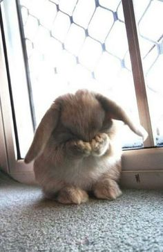 You have upset bunny. You should be ashamed of yourself...
